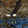 Landing Approach by Shari Sommerfeld