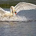 Landing by Kent Mathiesen