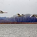 Landing by Lynn Sprowl