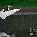 Landing by Miguel Celis