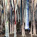 Landscape Forest Trees by Mary Clanahan