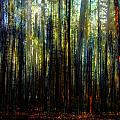 Landscape Forest Trees Tall Pine by Mary Clanahan