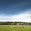 Landscape Near East Prawle In England by Chevy Fleet