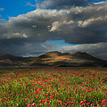 Landscape Of Poppy Fields In Front Of Mountain Range With Dramat by Matthew Gibson