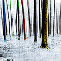 Landscape Winter Forest Pine Trees by Mary Clanahan