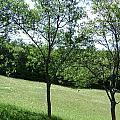 Landscape2 by Bota Daniel