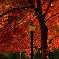 Lantern In Autumn by Susanne Van Hulst
