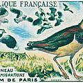 Lapwings Study Of Migration Museum Of Paris by Jeelan Clark