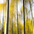 Larch In Abstract by Anne Gilbert