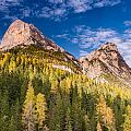 Larch On A Slope by Michael Blanchette