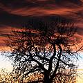Large Cottonwood At Sunset by Shane Bechler