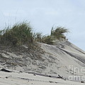 Large Dunes by Cathy Lindsey