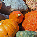 Large Edible Gourds by Barbara McMahon