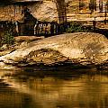Large Rock In Cumberland River by Amanda Kiplinger