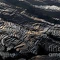 Large Scale Of Rice Terrace by Kim Pin Tan