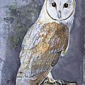 Large White Barn Owl by Kathryn Dalziel