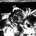 Las Vegas Flowers by Angus Hooper Iii