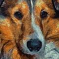 Lassie - Rough Collie by Dragica  Micki Fortuna