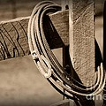 Lasso On Fence Post Rustic by Paul Ward