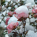 Last Bloom Of Summer by Robert DeFosses