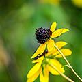 Last Blooms Of Summer by Randy Scherkenbach