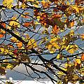 Last Breaths Of Fall by Rima Biswas