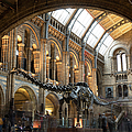 Last Day At The Museum For Dippy The by Dan Kitwood