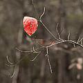 Last Leaf by Marx Broszio