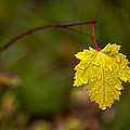 Last Leaf by Mary Jo Allen
