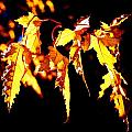 Last Leaves Of Summer by David Matthews