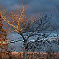 Last Light Last Leaves by Brian Boyle