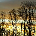 Last Rays Of Light by Jeffery L Bowers