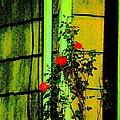 Last Roses Of The Season by Sonali Gangane