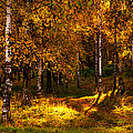 Last Song Of The Autumn 1 by Jenny Rainbow