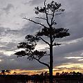 Last Tree Standing by Skip Willits
