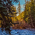 Late Afternoon Along The South Platte by Mike Schaffner