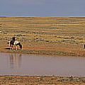 Late Afternoon At The Water Hole - 20x90 by J L Woody Wooden