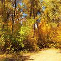 Late Autumn Colours by Svetlana Sewell