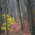 Late Autumn Forest by Bill Wakeley