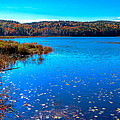 Late Autumn On Loon Lake by David Patterson
