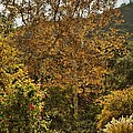 Late Autumn Walk by Peggy Hughes