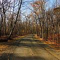 Late Fall At Cheesequake State Park by Raymond Salani III
