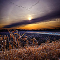 Late For Dinner by Phil Koch