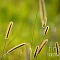 Late Summer Grasses by Karin Everhart