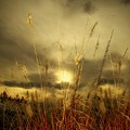 Late Summer Sun Through The High Grass by Gothicrow Images
