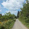 Late Summer Trail by Gene Cyr