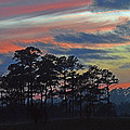 Late Sunset Trees In The Mist by Bill Swartwout Fine Art Photography