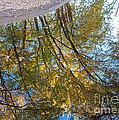 Latsch Backwater Reflections by Kari Yearous