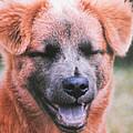 Laughing Dog by Belinda Lee