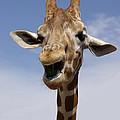 Laughing Giraffe by Jim And Emily Bush